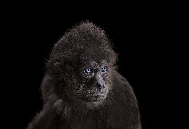 Spider monkey. (Photo by Brad Wilson)