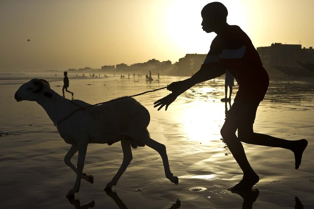 A boy chases a ram into the Atlantic Ocean as residents wash their sheep before sacrifice, in preparation for the Eid al-Adha feast in Dakar, Senegal October 26, 2012. (Photo by Rebecca Blackwell/Associated Press)