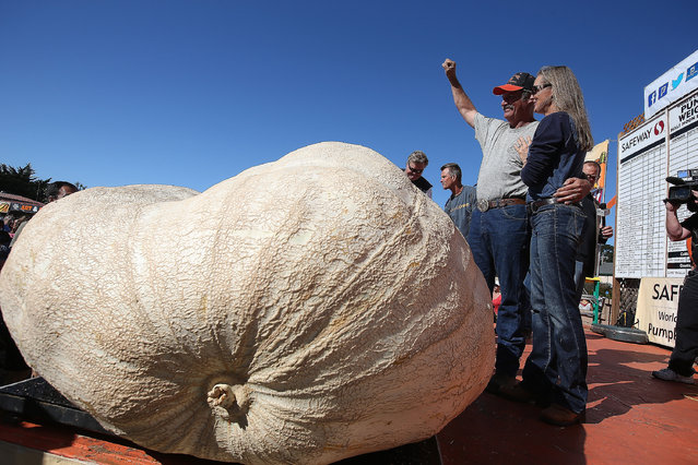 John Hawkley and his wife Patty Hawkley stand next to their 2,058 pound pumpkin and celebrate after winning the 41st Annual Safeway World Championship Pumpkin Weigh-Off on October 13, 2014 in Half Moon Bay, California. John Hawkley of Napa, California won the 41st Annual Safeway World Championship Pumpkin Weigh-Off and broke a state record with his gigantic pumpkin weighing in at 2,085 pounds. Hawkley took home a cash prize of $12,510, or $6.00 a pound. (Photo by Justin Sullivan/Getty Images)