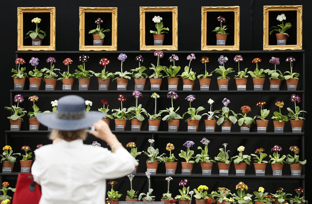 A woman photographs a floral display at the Chelsea Flower Show in London May 19, 2014. (Photo by Stefan Wermuth/Reuters)