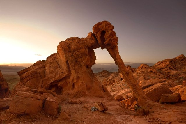 The elephant rock formation in Valley of Fire State Park in Nevada – A strange natural sandstone rock formation resembling an elephant. (Photo by Steffen and Alexandra Sailer/Ardea/Caters News)