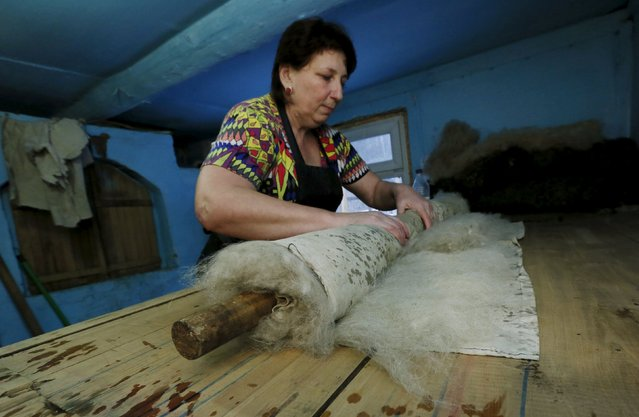 Larisa Chirkova, 45, an assistant of Ivan Plakhuta, the owner of a small workshop manufacturing valenki, Russian traditional footwear, shapes wool in the remote Siberian village of Bolshaya Rechka, located in Taiga area in the foothills of the Western Sayan Mountain Ridge in the Yermakovsky district of Krasnoyarsk region, Russia, November 10, 2015. (Photo by Ilya Naymushin/Reuters)