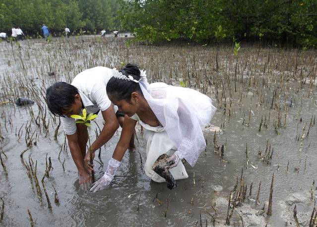 """A newly wed couple, Joey Bayo, 24 and his wife Lea, 20, plant a mangrove tree after a mass wedding of the theme """"Love affairs with Nature"""", in San Jose town, Puerto Princesa, Palawan city, western Philippines February 14, 2011. At least 150 couples were married on the Valentine's Day in Palawan. (Photo by Romeo Ranoco/Reuters)"""