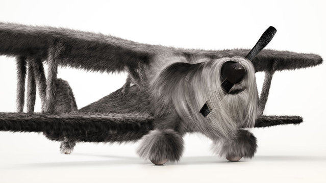 German WW1 fighter camoflaged as a Schnauzer. London-based INK created the impressive images by pairing a Spitfire with a Beagle, a Golden Retriever with a Wellington Bomber and a Schnauzer with a German bi-plane. (Photo by BNPS)