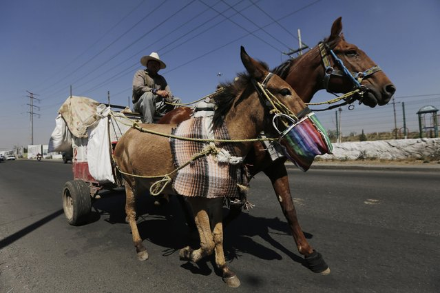 A garbage collector rides his horses and cart in Nezahualcoyotl, on the outskirts of Mexico City, February 18, 2015. (Photo by Henry Romero/Reuters)