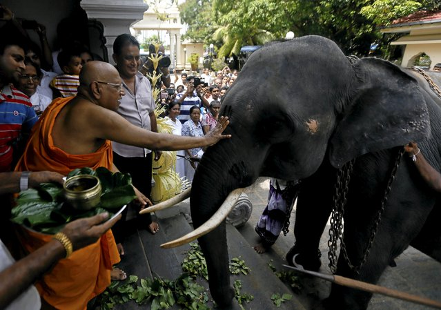 Bellanwila Wimalaratana, chief Buddhist monk of the Bellanwila temple, prepares to bless the temple's elephant during a ceremony as part of the Sinhala, Hindu and Tamil new year celebrations in Boralasgamuwa April 16, 2016. (Photo by Dinuka Liyanawatte/Reuters)