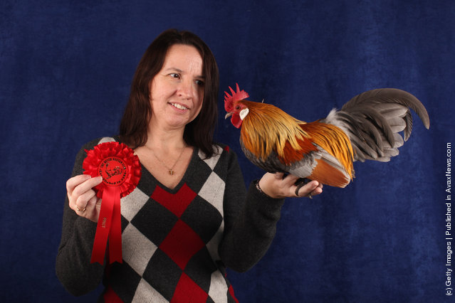 Nicky Demaine, from Bristol, holds her 24 month old Blue Partridge Dutch Cockerel