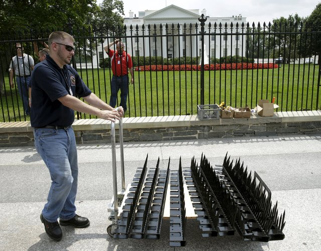 A U.S. government contractor wheels out parts needed to begin the initial installation of security spikes (on cart) on the existing White House perimeter fence in Washington, United States, July 1, 2015. The White House fence will start to get a spiked top on Wednesday in a short-term bid to thwart intrusions at the U.S. executive mansion, authorities said. (Photo by Gary Cameron/Reuters)