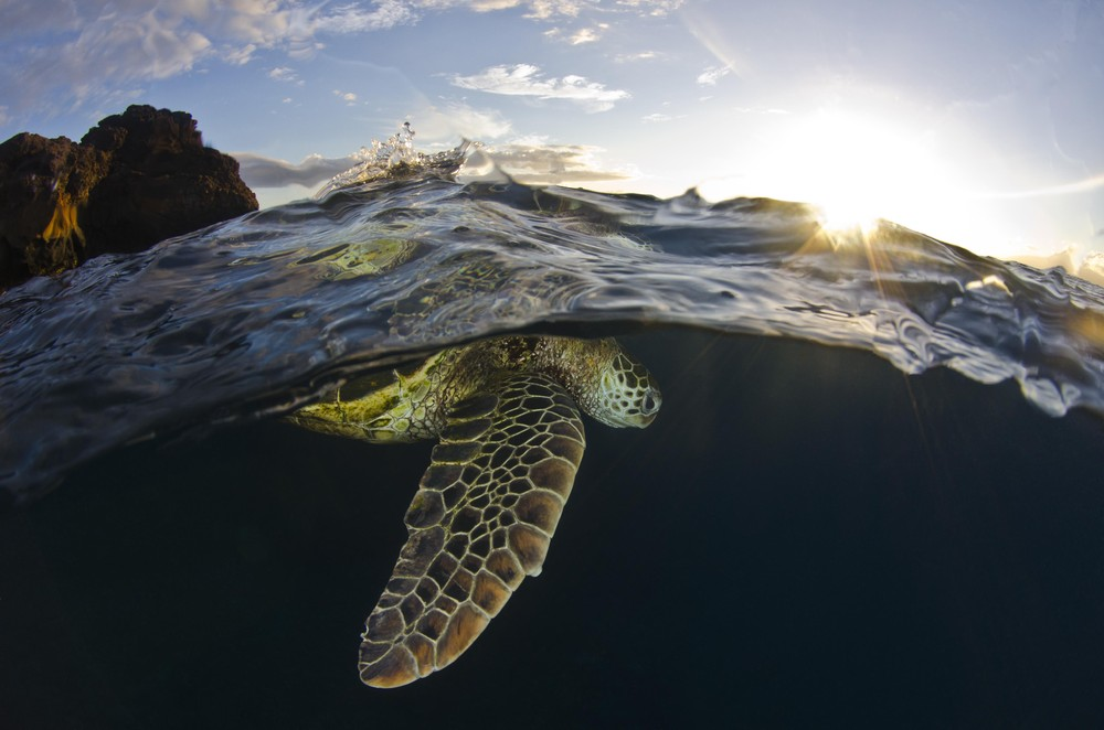 Smithsonian Magazine's 2013 Photo Contest (Updated)
