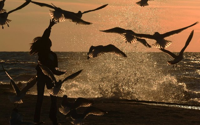 A girl feeds seagulls as the sun sets along Lions Park Beach in St. Joseph, Mich., Tuesday, November 5, 2019. (Photo by Don Campbell/The Herald-Palladium via AP Photo)