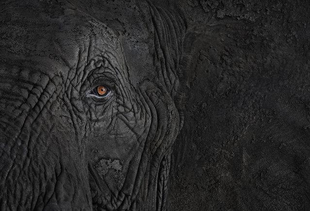 Elephant. (Photo by Brad Wilson)