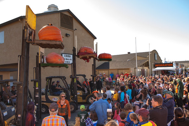 Four entrants in the prettiest pumpkin category are lifted into the air for the crowd at the 41st Annual Safeway World Championship Pumpkin Weigh-Off  in Half Moon Bay, Calif., Monday, October 13, 2014. (Photo by Alex Washburn/AP Photo)