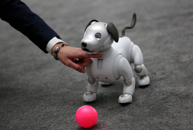 The Aibo robot dog is on display at the Sony booth after a news conference at CES International, Monday, January 8, 2018, in Las Vegas. (Photo by John Locher/AP Photo)