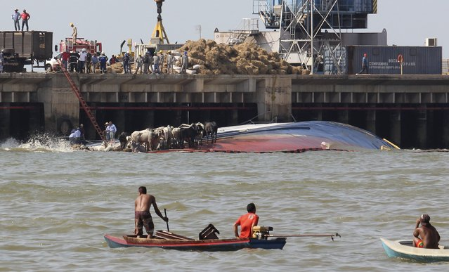 People look at cows perched on the side of livestock carrier Haidar, loaded with some 5,000 cattle, after it capsized at the Vila do Conde port in Bacarena, Para state, Brazil, October 6, 2015. Thousands of cows drowned, with no human casualties, after the ship capsized while getting getting ready to depart for Venezuela, according to port authorities and local media. Some of the livestock managed to escape from the ship's hold. (Photo by Ney Marcondes/Reuters)