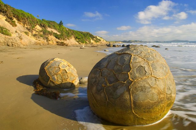 The Moeraki Boulders of New Zealand – The gigantic boulders started forming on the ocean floor and can now been seen sitting mysteriously on the coastline thanks to centuries of erosion. (Photo by Alexandra Sailer/Ardea/Caters News)