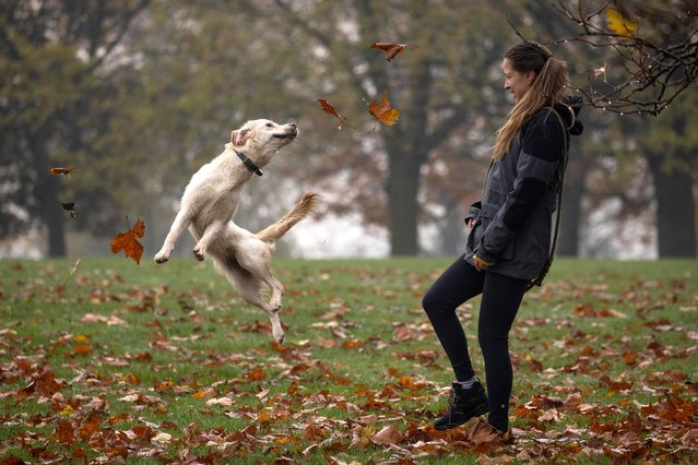 Mariana kicks leaves for her dog Narla in Hilly Fields on November 06, 2020 in London, England (Photo by Dan Kitwood/Getty Images)
