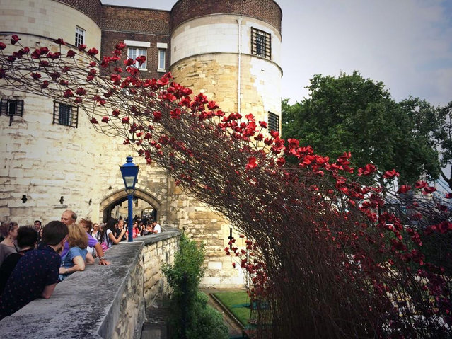 Ceramic Poppies Surround the Tower of London