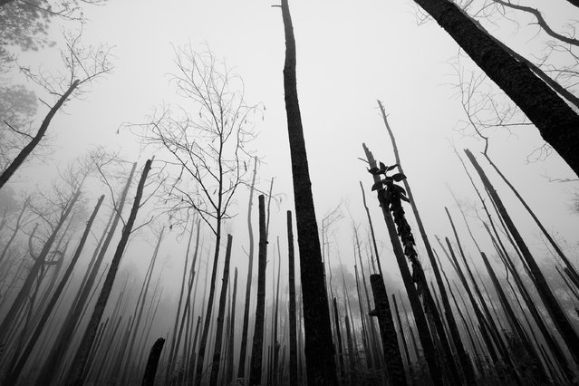 """Haunted forest"". While birding in Sierra de Bahoruco, near the Dominican-Haitian border, I drove passed the 2,000mt of altitude into this foggy burnt forest. The atmosphere was magical and sad at the same time. (Photo and caption by Mario Davalos/National Geographic Traveler Photo Contest)"