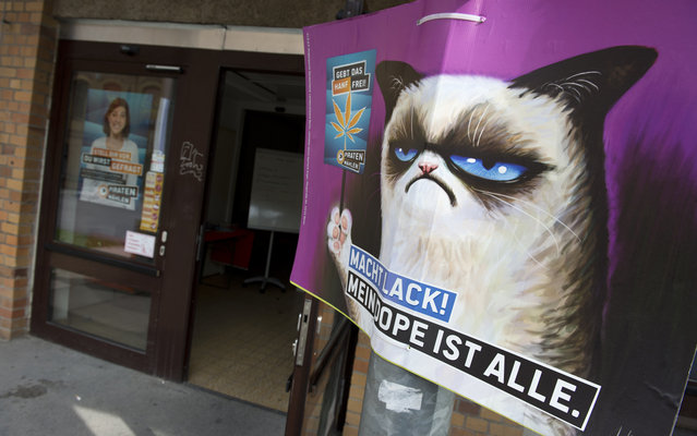 "An election poster calling for the legalisation of marijuana and featuring internet meme ""Grumpy Cat"" hangs outside the Pirate Party's campaign headquarters in Berlin on August 16, 2013. The Pirates, who to everyone's surprise were elected into Berlin's regional parliament in September 2011, are trying to capitalise on their recent electoral gains in upcoming parliamentary elections, running on a platform of transparency in government. Germany goes to the polls on September 22, 2013. Placard reads: ""Hurry up, my dope is everything"". (Photo by John Macdougall/AFP Photo)"