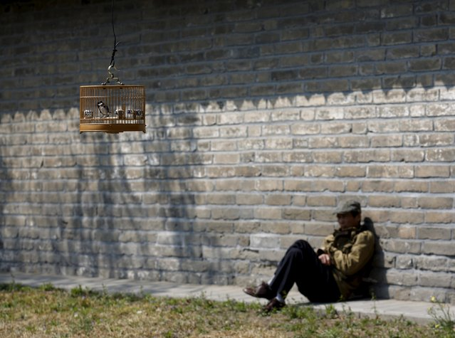 A man takes a rest after hanging his bird cage on a tree at a park in Beijing April 13,  2015. (Photo by Kim Kyung-Hoon/Reuters)