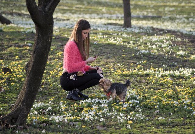 """In this February 16, 2016 file photo, a girl takes pictures of her dog, back dropped by freshly sprung snowdrops and other spring flowers during an unseasonably warm winter day, in Bucharest, Romania. Earth got so hot last month that federal scientists struggled to find words, describing temperatures as """"astronomical"""", """"staggering"""" and """"strange"""". They warned that the climate may have moved into a new and hotter neighborhood. (Photo by Vadim Ghirda/AP Photo)"""