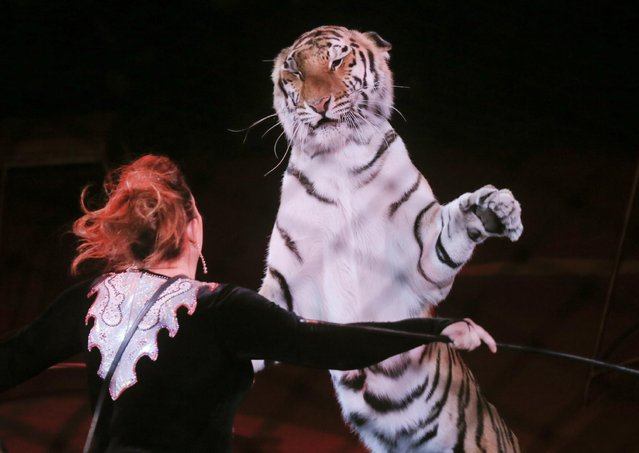 Yulia Kozyreva, a circus artist, performs with a tiger during a show in Ukraine's National Circus in Kiev, Ukraine, Sunday, May 10, 2015. (Photo by Efrem Lukatsky/AP Photo)