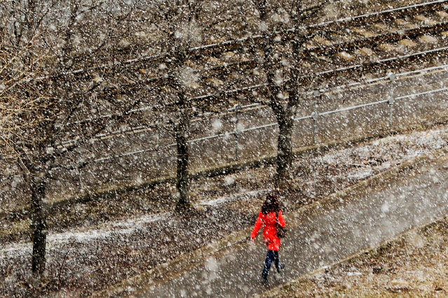 A woman walks towards tram lines during a snowfall in Moscow on March 29, 2019. (Photo by Kirill Kudryavtsev/AFP Photo)