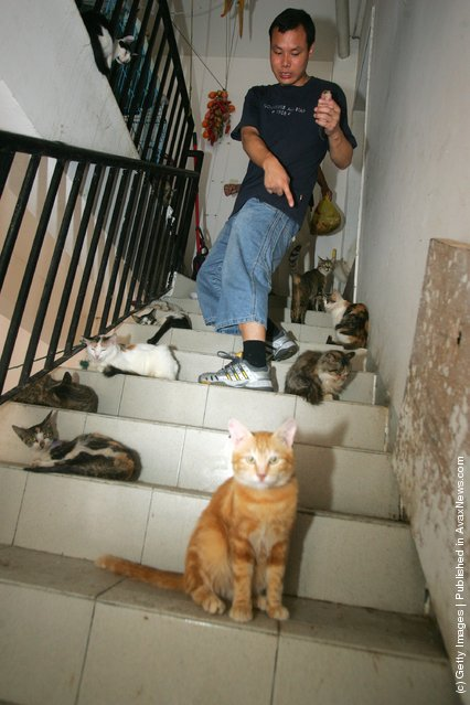Animal Lover Duo Zirong's Family And Their Adopted Cats