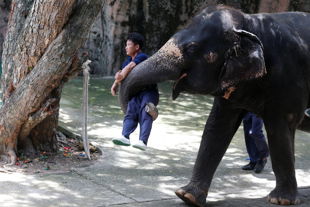 An elephant holds up a trainer during a performance for tourists at the Sriracha Tiger Zoo in the Chonburi province, Thailand June 7, 2016. (Photo by Chaiwat Subprasom/Reuters)