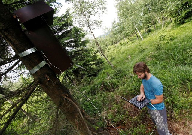 "Scientist Jiri Sindelar downloads data from the ""Smart Nest Box"", which allows the study of birds by using mounted cameras, in a forest near the village of Mikulov, Czech Republic, June 18, 2016. (Photo by David W. Cerny/Reuters)"