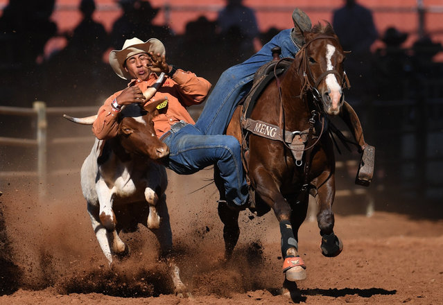 A competitor takes part in a Steer Wrestling competition at the Mount Isa Rodeo, Queensland, Australia, 11 August 2017. The event, in the remote outback town of Mount Isa, is the biggest rodeo in the Southern Hemisphere. (Photo by Dan Peled/EPA)