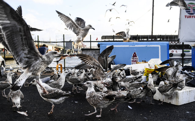 Seagulls fight for fish remains at a fish market in the Karakoy district in Istanbul on August 16, 2017. (Photo by Bulent Kilic/AFP Photo)