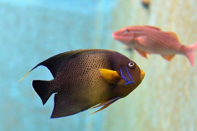 Okinawa Churaumi Aquarium