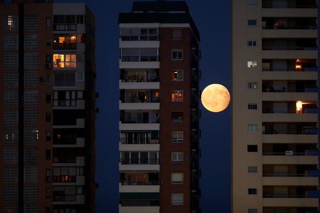 The rising moon is seen during a partial lunar eclipse between buildings in Malaga, southern Spain August 7, 2017. (Photo by Jon Nazca/Reuters)