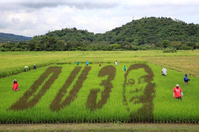"""An artwork featuring the image of Philippine President Rodrigo Duterte with the letters D U and the number 3, a word play on the President's surname """"DU30"""", is seen on a rice paddy in Los Banos city, Laguna province, south of Manila October 6, 2016. (Photo by Romeo Ranoco/Reuters)"""