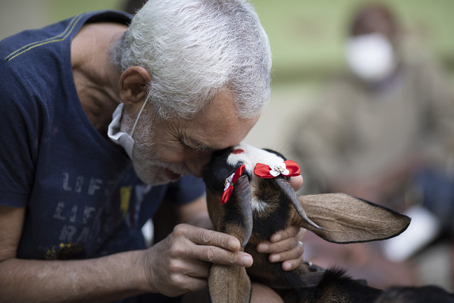 An elderly man caresses a goat named Jurema, wearing ribbons on her ears, at the Maria Vieira Bazani nursing home in Rio de Janeiro, Brazil, Thursday, October 22, 2020. The NGO Golias brought several animals, who they rescued from abandonment, to provide relief from the isolation many elderly people feel, cut off from friends and family due to fear of contagion from the new coronavirus. (Photo by Silvia Izquierdo/AP Photo)