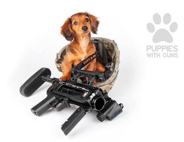Initially the project started when I was working in Atlanta. About four years ago, a roommate of mine had a Yorkie and we thought it would be funny to take some photos of this really cute dog with a few handguns. Once my friends saw the photos they started asking me to take pictures of their dogs with other firearms. (Photo and caption by Ben Haulenbeek/Puppies with guns calendar 2015)