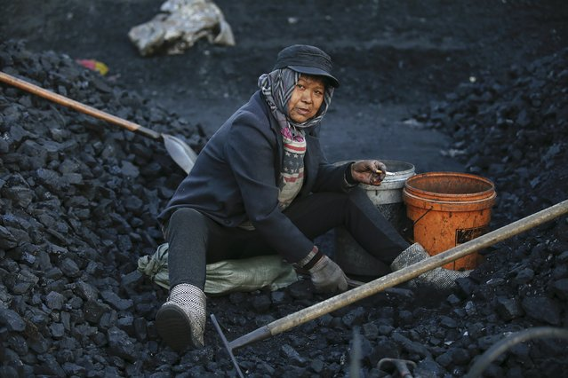 A villager is pictured as she selects coal at local businessman Sun Meng's small coal depot near a coal mine of the state-owned Longmay Group on the outskirts of Jixi, in Heilongjiang province, China, October 23, 2015. (Photo by Jason Lee/Reuters)