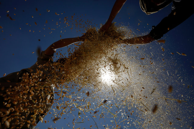 Farmers winnow wheat during harvest season in Sana'a, Yemen, 26 October 2020. According to reports, many Yemenis depend on agriculture industry for their livelihoods, with nearly 60 percent of the nations labour force working in the sector. (Photo by Yahya Arhab/EPA/EFE)