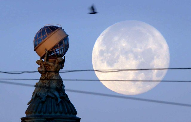 A dove flies over a glass globe sculpture installed atop the tower of the Singer House on the Nevsky Avenue as the full moon sets in St. Petersburg, Russia, Wednesday, October 28, 2015. (Photo by Dmitry Lovetsky/AP Photo)
