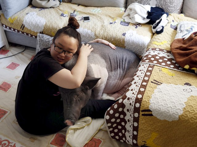 Zhu Roumeng hugs her pet pig, Wuhua, in her house in Beijing April 22, 2015. (Photo by Kim Kyung-Hoon/Reuters)