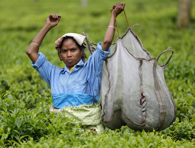 A tea garden worker lifts a bag with plucked tea leaves inside Aideobarie Tea Estate in Jorhat in Assam, India, April 21, 2015. (Photo by Ahmad Masood/Reuters)