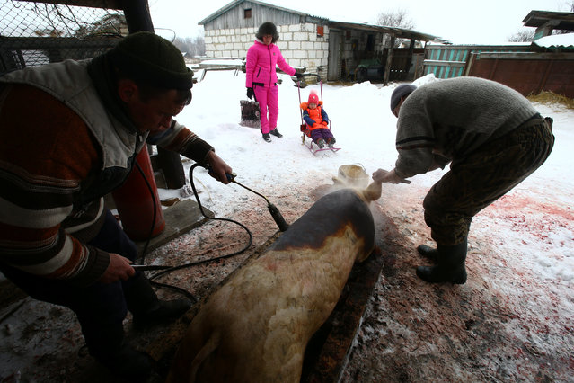 Hunters Vladimir Krivenchik and Nikolay Skidan clean the pig after slaughtering it at their house in the village of Khrapkovo, Belarus February 3, 2017. (Photo by Vasily Fedosenko/Reuters)