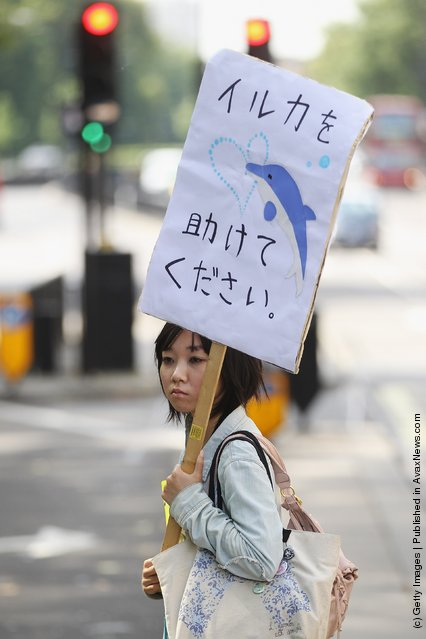 Protesters demonstrate outside the Japanese embassy against Japan's hunting of sea mammals in London, England