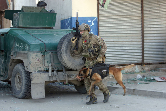 A foreign soldier arrives with his dog on the scene after a suicide bombing in Kabul, Afghanistan, Wednesday, March 1, 2017. A pair of suicide bombings, both claimed by the Taliban, struck the Afghan capitall, an Afghan official said. (Photo by Rahmat Gul/AP Photo)