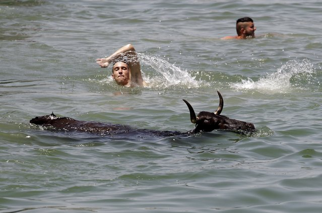 """A bull swims in the sea next to revellers during the """"Bous a la Mar"""" festival in the eastern Spanish coastal town of Denia, Spain, July 6, 2015. Revellers emerge from protective barriers to provoke bulls to chase them during this festival, until they both fall into the sea. The bulls are then rescued by small boats which will tow them to safety. (Photo by Heino Kalis/Reuters)"""