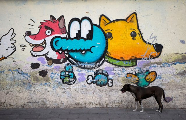 A dog stands beside street graffiti in Xochimilco, on the southern edge of Mexico City, May 7, 2014. In Xochimilco, busy markets stand side by side with colonial churches, and children ride to school in boats pushed by poles, along a network of canals and floating gardens. (Photo by Rebecca Blackwell/AP Photo)