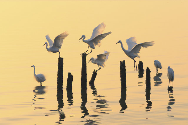 """""""Birds in the morning light"""". In Shenzhen bay,very close to the city,there is a big reserved area for the birds.It is very precious n such a big city. Photo location: Shenzhen city, Guangdong province, China. (Photo and caption by Qing Song Liu/National Geographic Photo Contest)"""