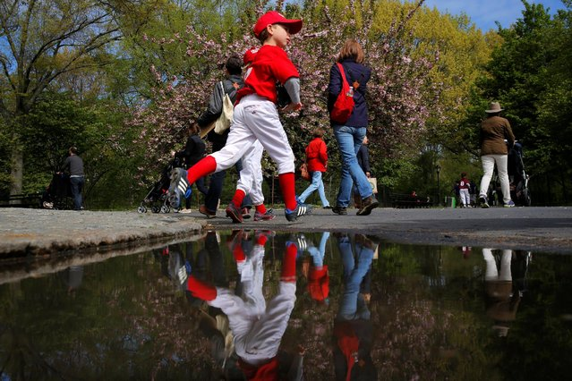 Young boys run to play little league as pedestrians look at Cherry blossoms inside of Central Park in New York, U.S., April 30, 2016. (Photo by Lucas Jackson/Reuters)