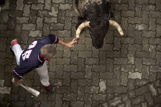 A running reveler touches the horn of a Torrestrella's ranch fighting bull during the running of the bulls of the San Fermin festival, in Pamplona, Spain, Monday, July 7, 2014. (Photo by Daniel Ochoa de Olza/AP Photo)